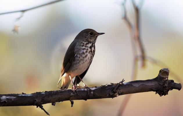 Community Bird Walk