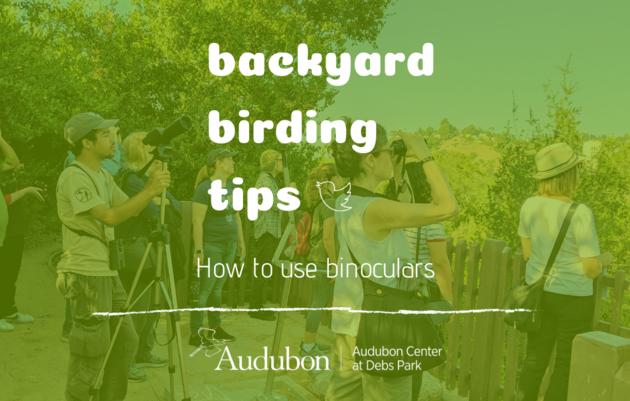 Backyard Birding Tips: How to use Binoculars