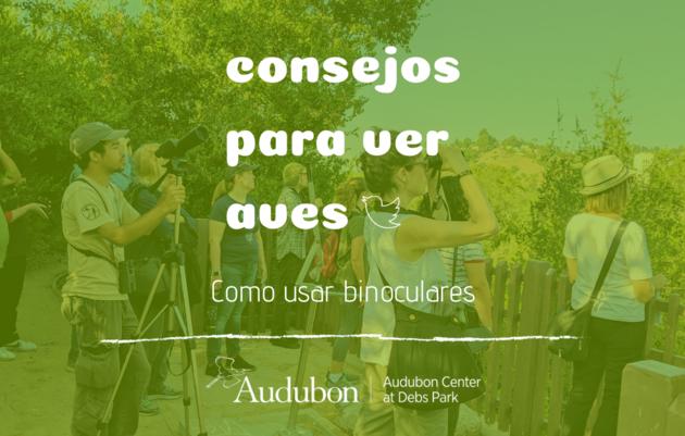 Consejos para ver aves: Cómo usar binoculares