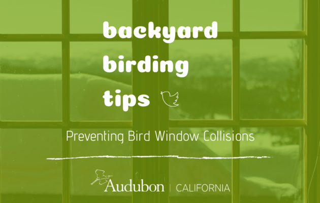 Backyard Birding Tips: Preventing Window Collisions