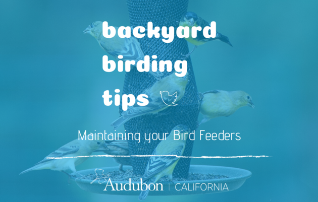 Backyard Birding Tips: Cleaning your Bird Feeders
