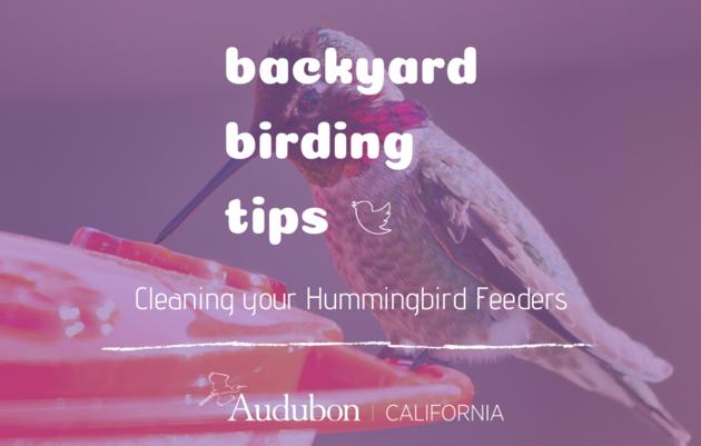 Backyard Birding Tips: Maintaining your Hummingbird Feeders