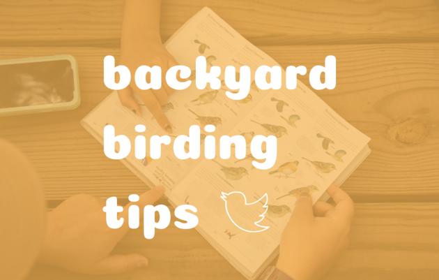 Backyard Birding Tips