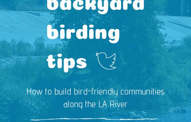 Backyard Birding Tips: How to be a Bird Ally along the LA River!