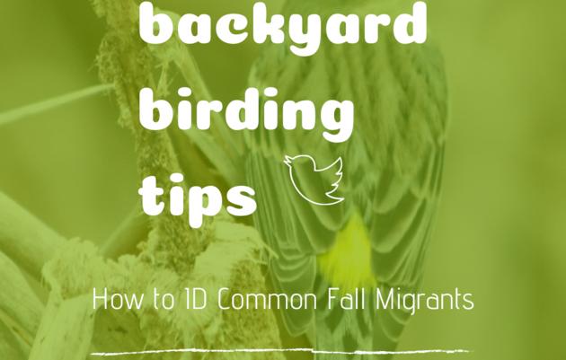 Backyard Birding Tips: How to Identify Common Fall Migrants