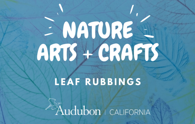 Nature Arts & Crafts: Leaf Rubbings