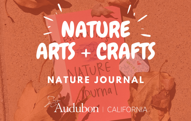 Nature Arts & Crafts: DIY Nature Journals