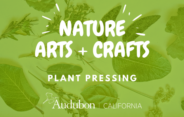 Nature Arts & Crafts: Plant Pressing