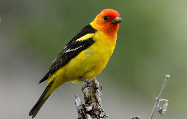 Bird list for Ernest E. Debs Park