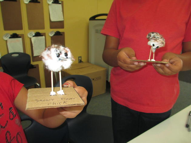 Making cotton ball chicks and learning how to save species
