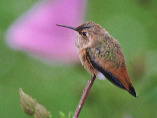 Bring hummingbirds to your yard or patio