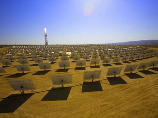 Responding to reports of bird deaths at Ivanpah solar facility