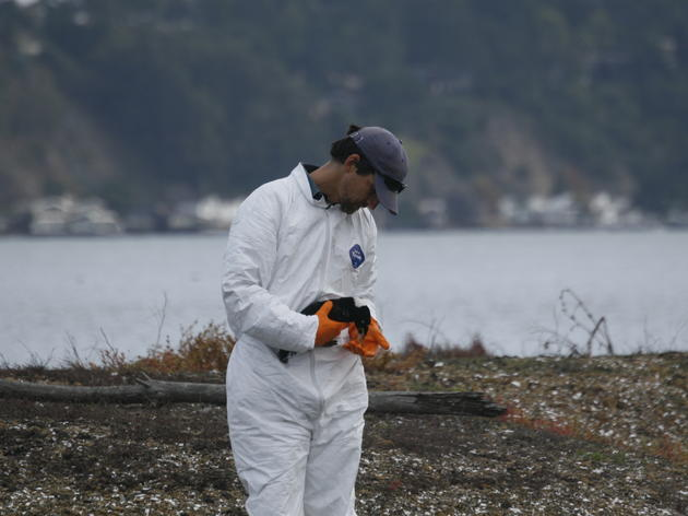 Following Ventura: can oil spills really be cleaned up?