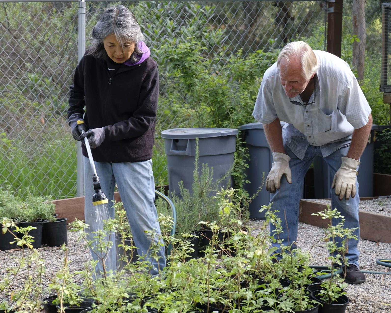 Volunteers tend California native plants at the Center's Los Nogales Nursery