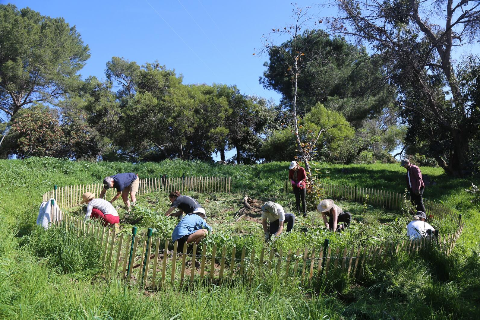 Community volunteers installing plants at Elysian Park, Winter 2019