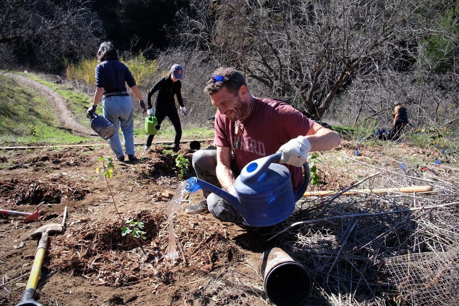 Volunteer maintaining native plants at Debs Park