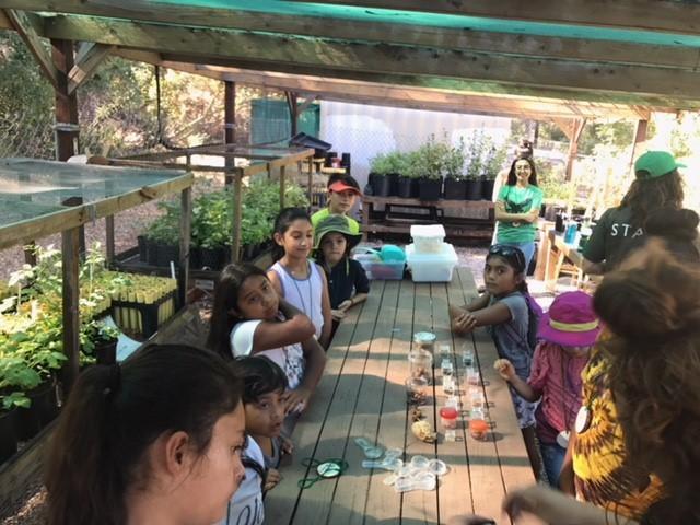 Campers propagate seed in Los Nogales Nursery