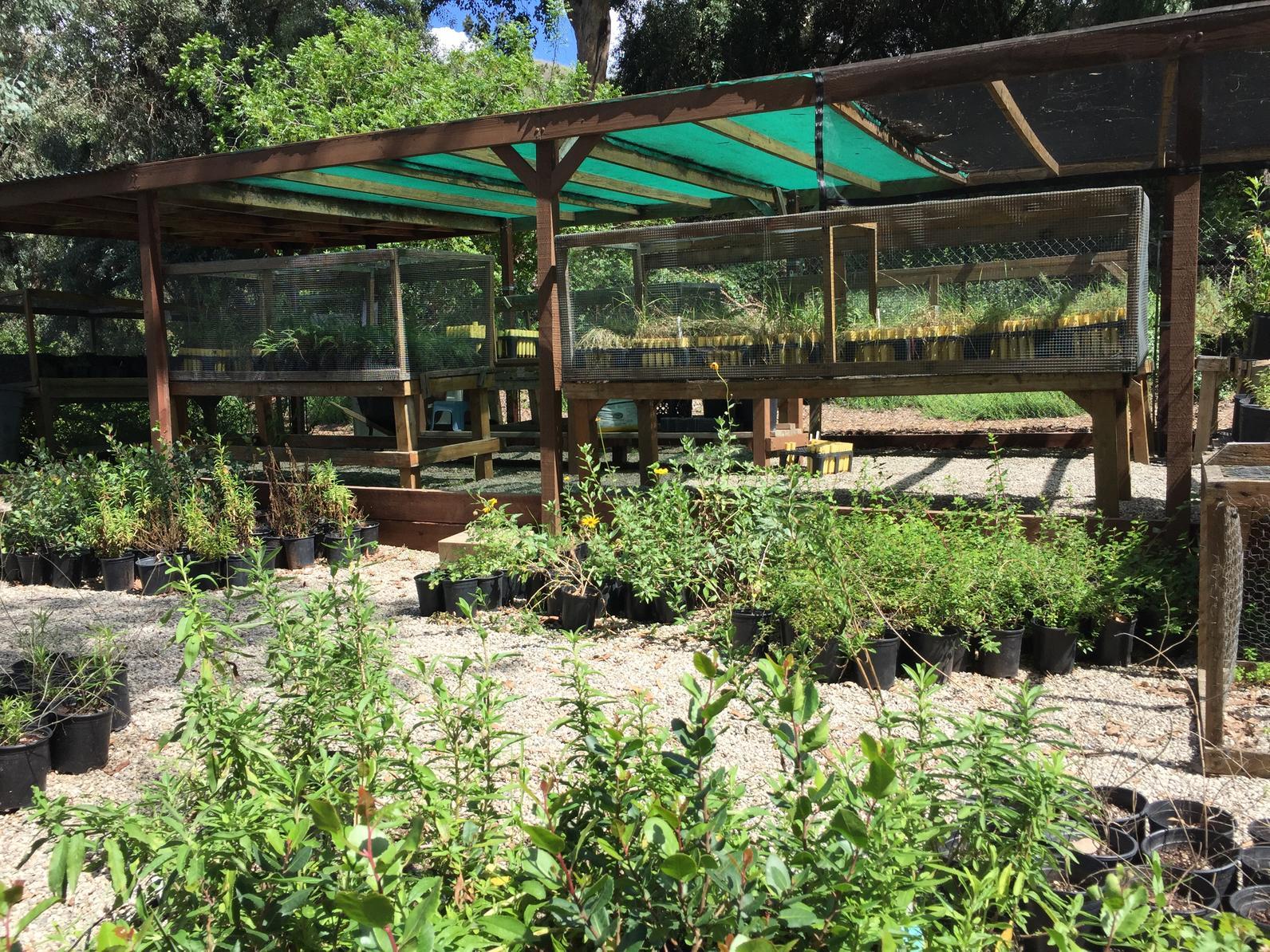 Los Nogales Native Plant Nursery