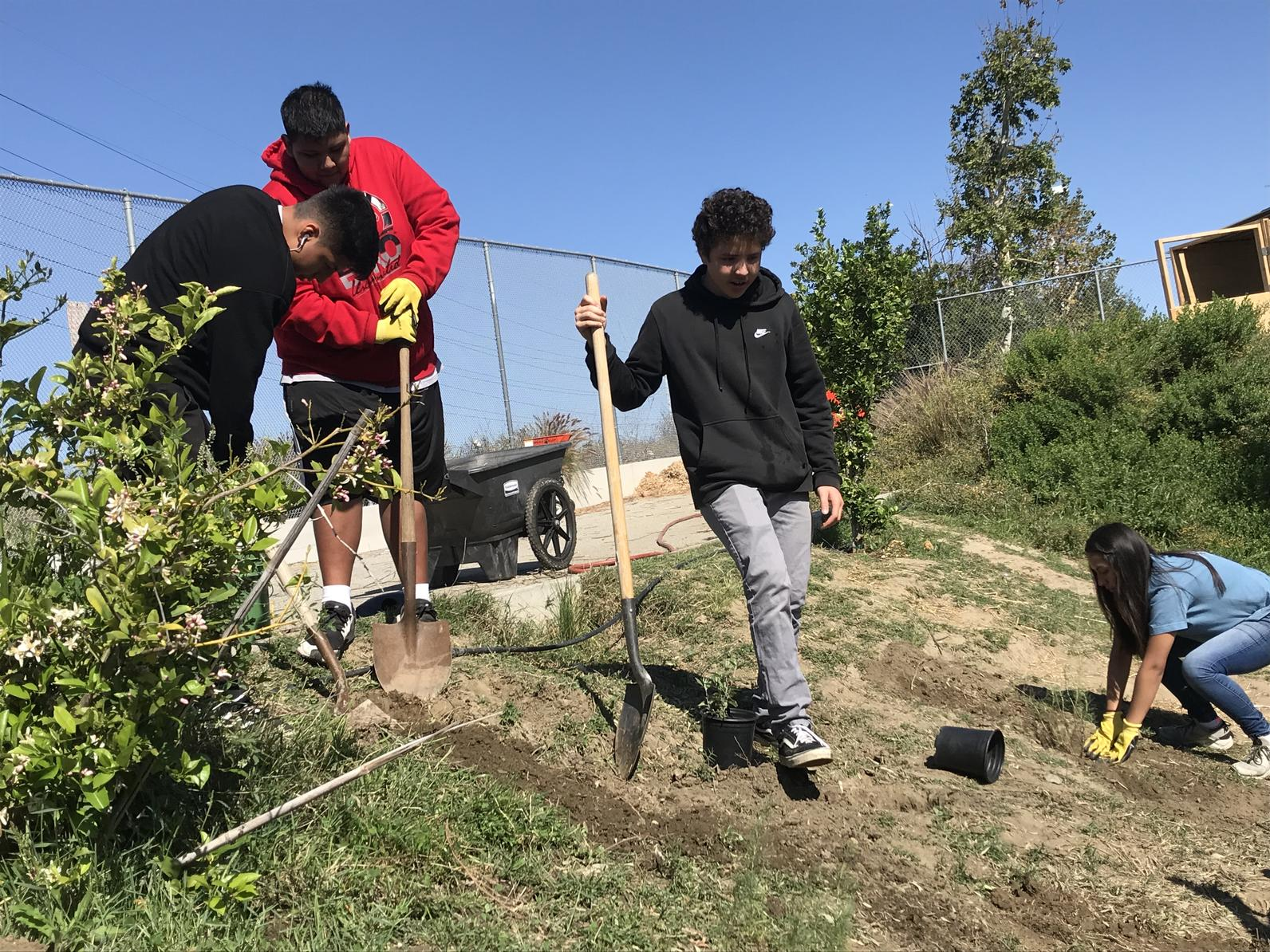Students at Sotomayor Learning Academy work on creating bird-friendly habitat at their school.