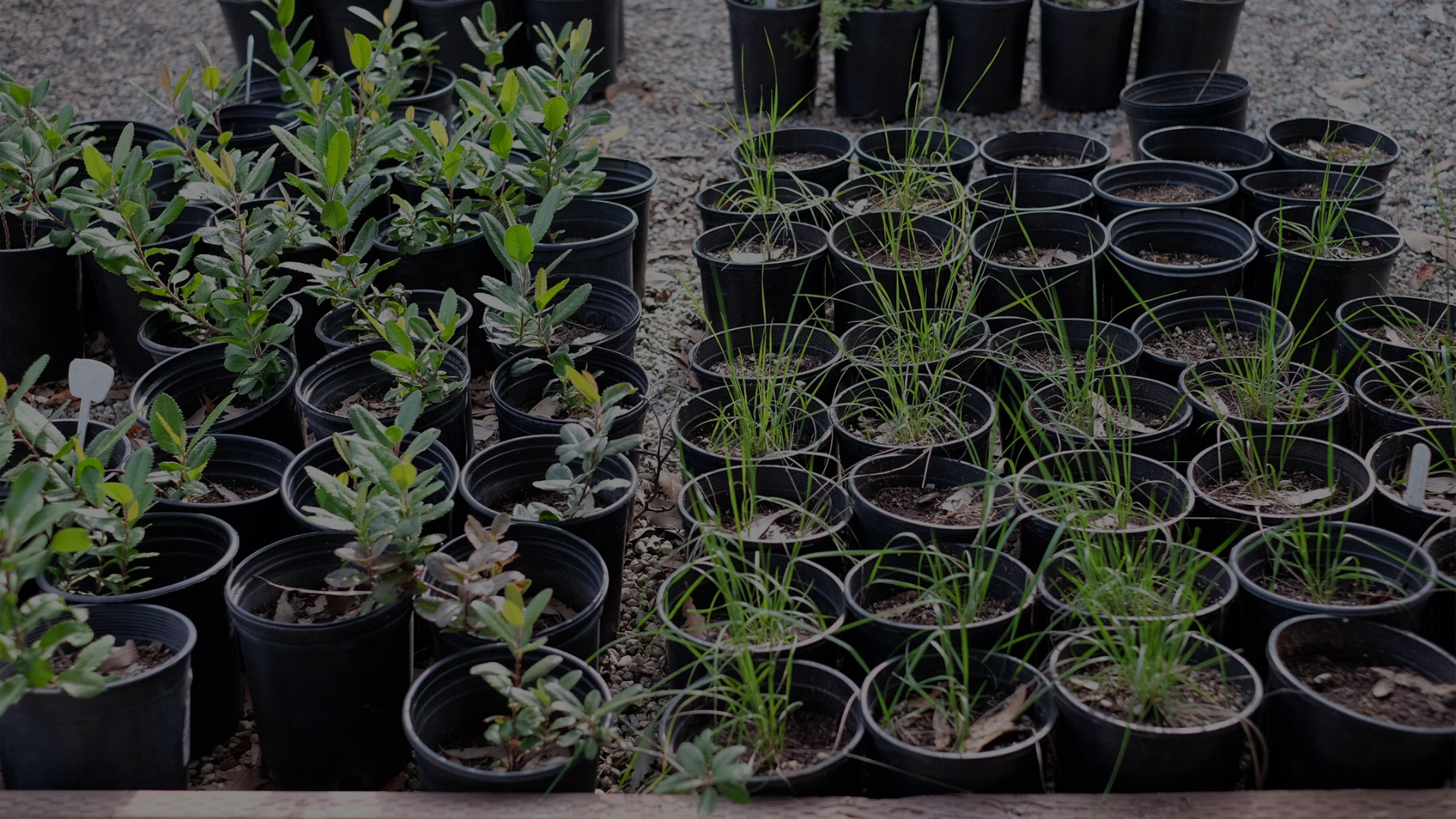 Los Nogales Native Plant Nursery