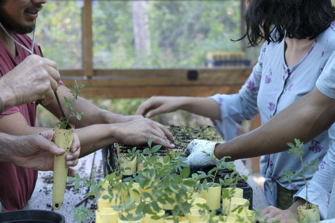 Volunteers work together to bump up California native plants at the Center's Los Nogales Native Plant Nursery.
